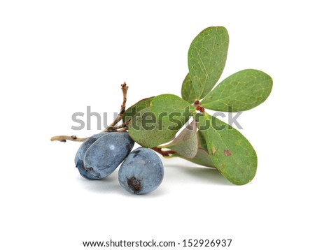 Berries of a bog bilberry with leaves on a white background