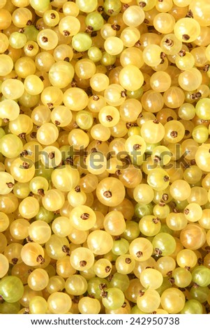 Berries of a white currant, for backgrounds or textures - stock photo