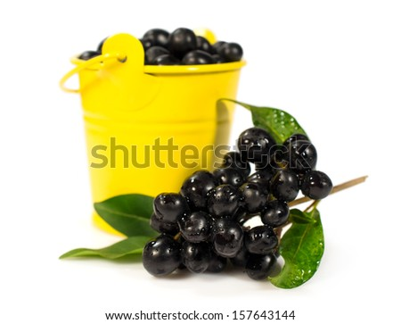 berries of black elder in a yellow bucket isolated on a white background - stock photo