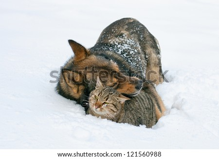 Best friends. Dog hugging cat in the snow outdoor - stock photo