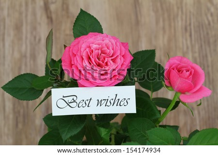 Best wishes card with wild pink roses