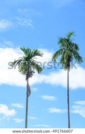 Betel palm tree with blue sky background
