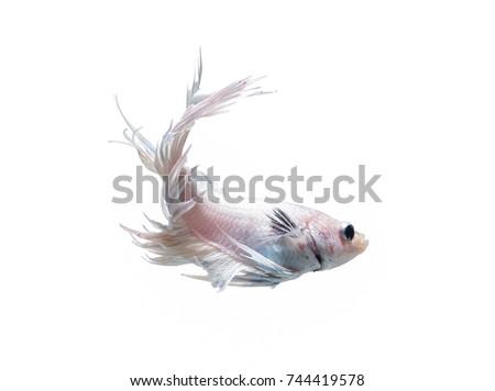 Erfreut Betta Fisch Färbung Seite Fotos - Framing Malvorlagen ...