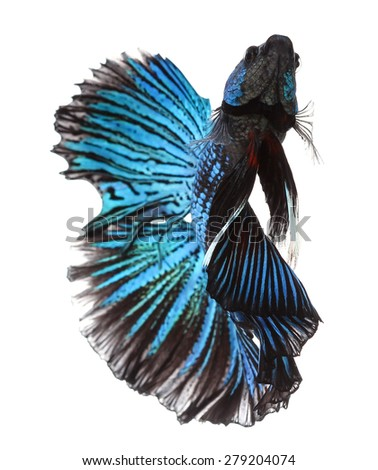 how to breed betta fish with pictures
