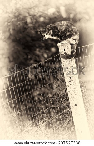 Between two gardens an adult tortoise-shell female cat perched on a concrete post asleeping. Sepia toned fine art portrait of domestic cat. - stock photo