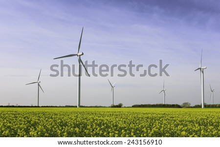 Beverley, Yorkshire, UK. Wind turbines stand still as the sun rises over a field of oilseed rape near Beverley, East Riding of Yorkshire, UK. - stock photo