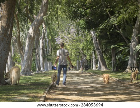 Beverly Hills, CA, USA  June,2nd, 2015 Beautiful tree lined Beverly Gardens Park is a popular spot for dog walkers of the rich and famous.  - stock photo