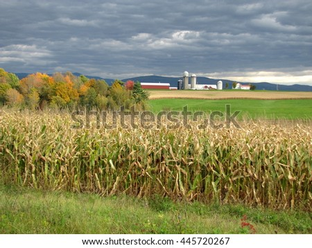 Beyond the corn