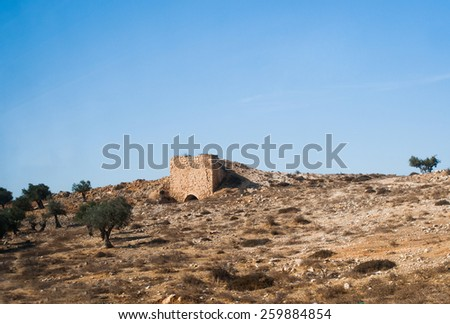 biblical olive trees and house, Palestine, Israel  - stock photo