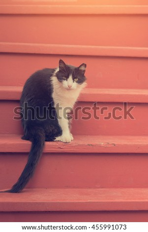 Bicolor black and white cat sitting on a brown stairs