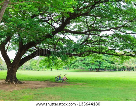 Bicycle in a park - stock photo