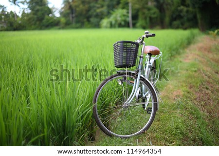 bicycle in rice paddy outdoor, asia -Thailand - stock photo