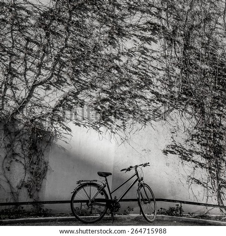 Bicycle in shade over the dry creeper wall - stock photo