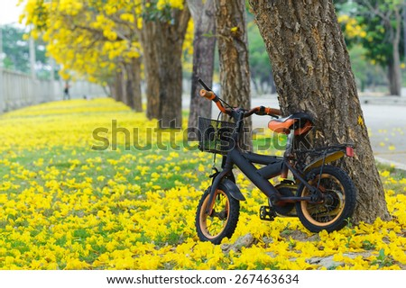 Bicycle in the park and yellow flower from the tree