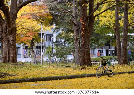 Bicycle on the ground full of ginkgo leaves