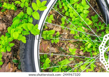 Bicycle on the ground in the forest