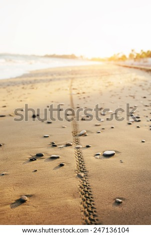 Bicycle tyre tracks on a sandy beach at sunset. Off road cycling. Active life style concept. - stock photo