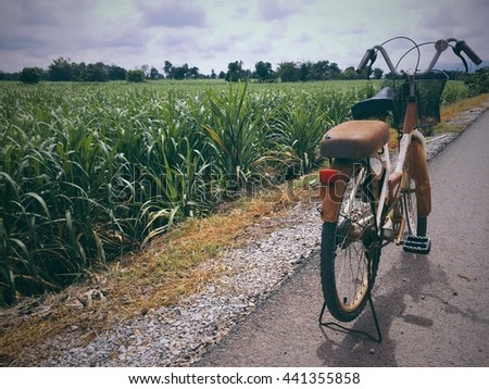 Bicycle with sugar cane farmland with blurry background.  - stock photo