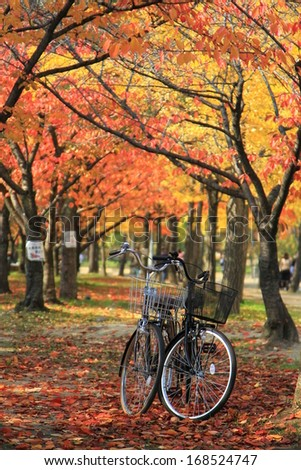 bicycles in autumn park