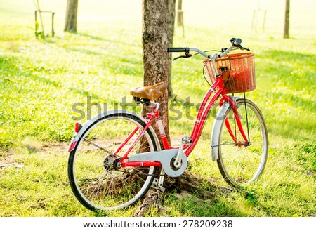 Bicycles parked against a tree - stock photo