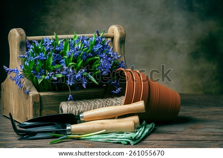 bifolia in the box garden tool on dark background - stock photo