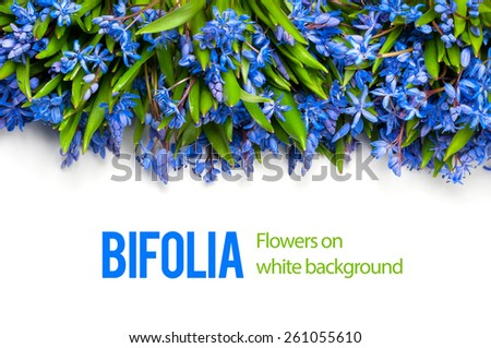 bifolia isolated - stock photo