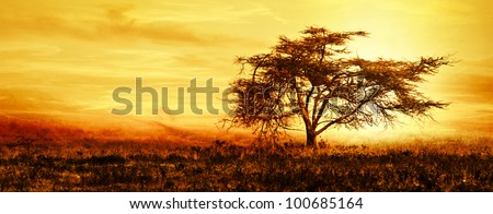 Big African tree silhouette over sunset, single tree on the field, beautiful panoramic image of nature at Africa, summer evening peaceful landscape of Masai Mara - stock photo