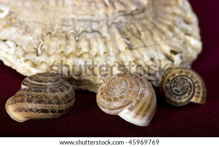 big ancient seashell  with three small seashells