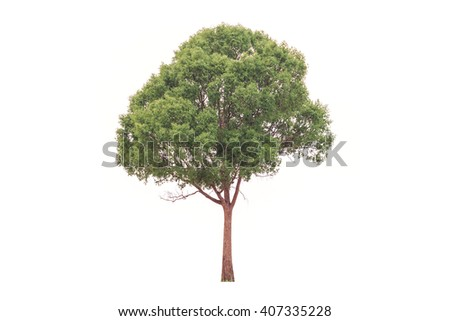 Big and high tree isolated on white background