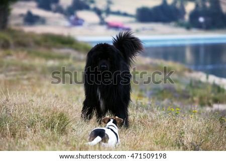 big and small dogs meet in the park near lake, dog friendship