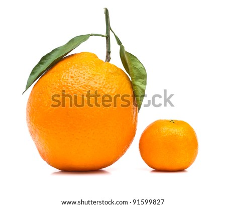 Big and small orange on white background
