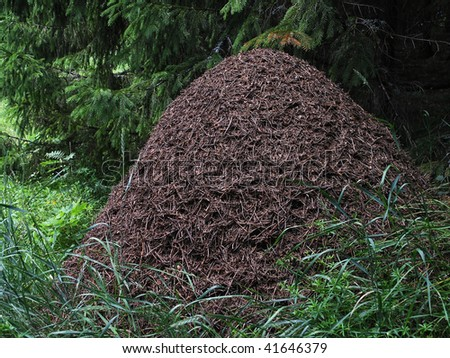 big anthill in the spruce forest horizontal - stock photo