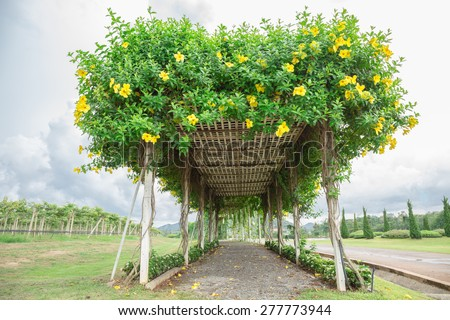 Big arbor of cathartica flower in green park - stock photo