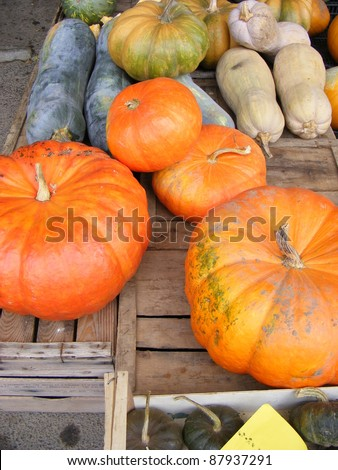 Big assortment of decorative small pumpkins