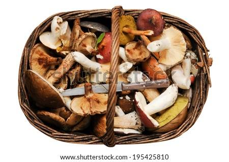 big basket of mushrooms isolated on white - stock photo