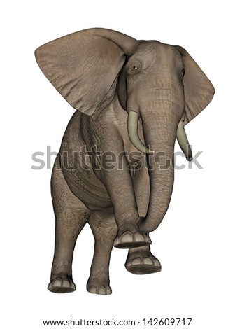 Big beautfiul elephant standing in white background