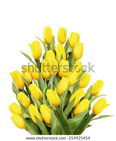 Big beautiful bouquet of yellow tulips on a white background - stock photo