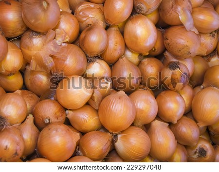 big beautiful bunch or pile of yellow onions at the market  - stock photo