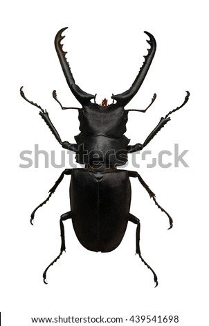 Big black beatle isolated on white - stock photo