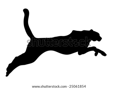 big black cat on white background - stock photo