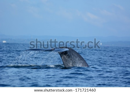 Big blue whales in deep ocean - stock photo