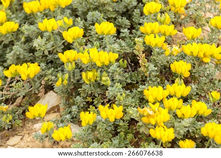 Big bright yellow flowers on background - stock photo