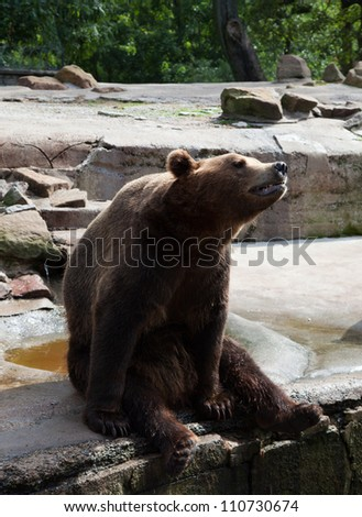 big brown bear in city zoo sitting on the stone - stock photo