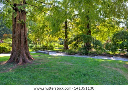 Big brown tree trunk on small green lawn among lush trees at botanical part of famous Valentino Park in Turin, Italy.