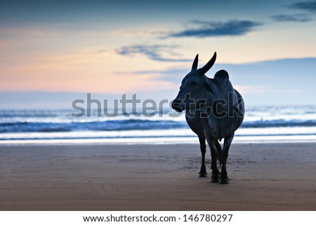Big bull silhouette on the Goa beach, India