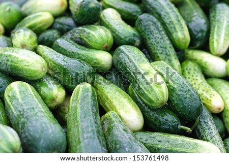 Big bunch of cucumbers at farmers market
