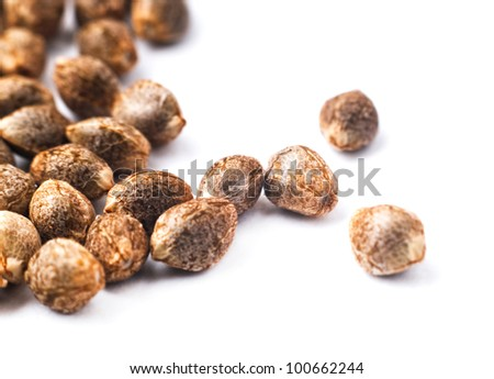 big cannabis seeds - stock photo