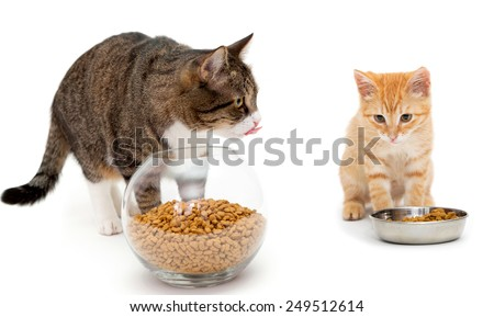 Big cat and little kitten eat dry food - stock photo