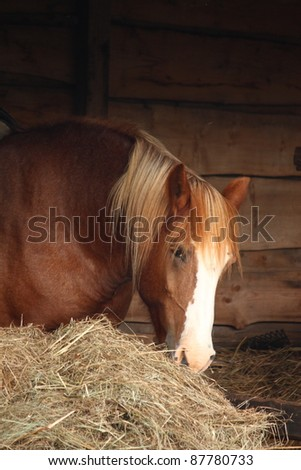 Big chestnut horse at the stable eating hay - stock photo