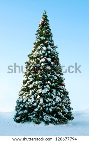 Big Christmas tree on snow, background of blue sky - stock photo